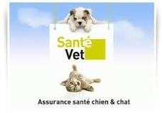 fr article assurances pour chiens et chats une tres bonne idee